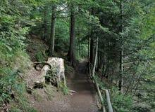 Camino forestal misterioso del cuento de hadas, trayectoria, tocón hermoso Imagen de archivo