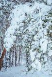 Camino forestal nevado, paisaje del invierno frío Foto de archivo libre de regalías