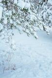 Camino forestal nevado, paisaje del invierno frío Fotografía de archivo libre de regalías