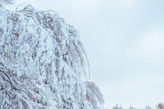 Camino forestal nevado, paisaje del invierno frío Fotos de archivo