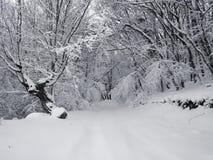 Camino forestal nevado, primer fotografía de archivo