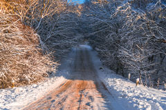 Camino forestal nevado, primer fotos de archivo