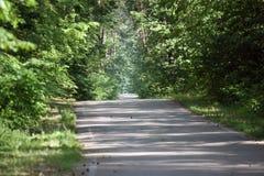 camino forestal para activar o completar un ciclo en el sol imágenes de archivo libres de regalías
