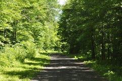 Camino forestal para regar caídas Fotos de archivo libres de regalías