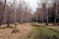 Camino forestal pintoresco con la hierba verde en tiempo nublado en primavera Foto de archivo libre de regalías