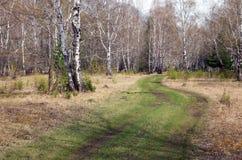 Camino forestal pintoresco con la hierba verde en tiempo nublado en primavera Imagenes de archivo