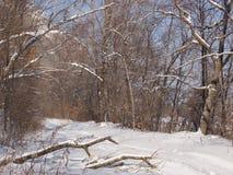 Camino forestal por la tarde del invierno Imágenes de archivo libres de regalías