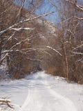 Camino forestal por la tarde del invierno Fotos de archivo