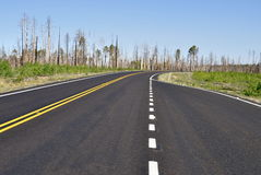 Camino forestal quemado Fotografía de archivo libre de regalías