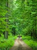 Camino forestal sin fin fotos de archivo libres de regalías