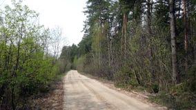 Camino forestal vacío en primavera en Rusia metrajes
