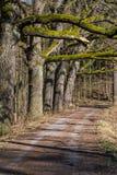 Camino forestal y árboles imágenes de archivo libres de regalías