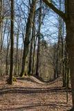 Camino forestal y árboles Imagen de archivo