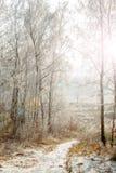 Camino forestal y árboles helados Foto de archivo libre de regalías