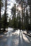 Camino helado con las sombras de árboles en bosque del pino Fotos de archivo