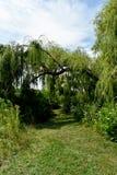 Camino herboso Foto de archivo libre de regalías