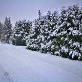 Camino hermoso del invierno fotografía de archivo