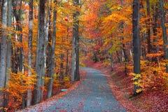 Camino hermoso del otoño Fotografía de archivo