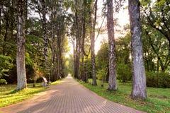 Camino hermoso del otoño en parque Altos árboles de abedul viejos Fotografía de archivo