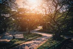 Camino hermoso entre los árboles en día soleado foto de archivo