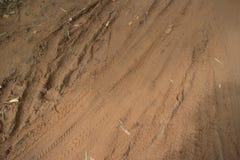 Camino horizontal de la selva de la opinión MCU de nivel del suelo después de secar en el sol un pedazo Foto de archivo