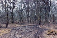 Camino infranqueable sucio en el bosque Imagenes de archivo