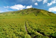 Camino a la colina Foto de archivo libre de regalías