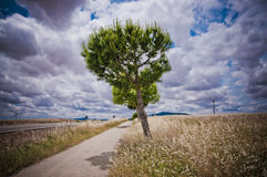 Camino a la ermita. In Don Benito, Extreumadura Royalty Free Stock Photos