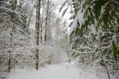 Camino a la madera del invierno Imagen de archivo