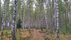 Camino a la naturaleza Fotos de archivo