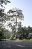 Camino a la selva Imagen de archivo libre de regalías