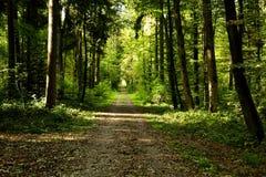 Camino largo Fotografía de archivo