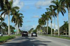 Camino a las palmeras Imagenes de archivo