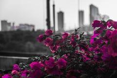 Camino lateral de la flor púrpura imagenes de archivo