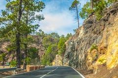 Camino a lo largo de los pinos canarios en Corona Forestal Nature Park, Te Imagen de archivo