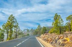Camino a lo largo de los pinos canarios en Corona Forestal Nature Park, Te Foto de archivo libre de regalías
