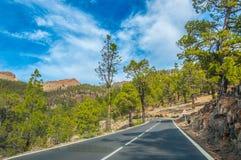 Camino a lo largo de los pinos canarios en Corona Forestal Nature Park, Te Fotografía de archivo libre de regalías