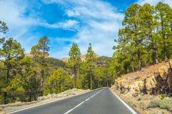 Camino a lo largo de los pinos canarios en Corona Forestal Nature Park, Te Imágenes de archivo libres de regalías
