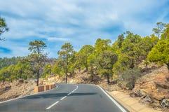 Camino a lo largo de los pinos canarios en Corona Forestal Nature Park, Te Imagen de archivo libre de regalías