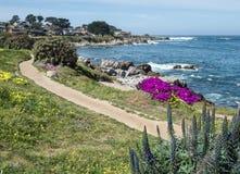 Camino a lo largo del bulevar de la vista al mar, arboleda pacífica Fotografía de archivo libre de regalías