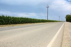 Camino a lo largo del campo de maíz con los postes de teléfono. Imágenes de archivo libres de regalías