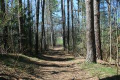 Camino los árboles en el parque Fotos de archivo
