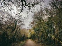 Camino mágico del bosque Fotos de archivo