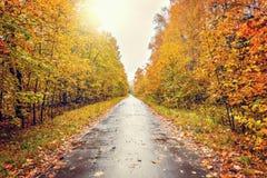 Camino mojado en el parque de la ciudad del otoño Fotografía de archivo libre de regalías