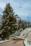 Camino mojado entre los abetos nevados Imagen de archivo