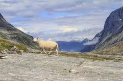 Camino nacional noruego RV63 Imagen de archivo libre de regalías