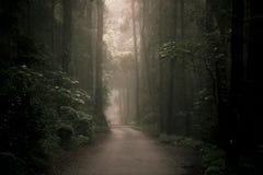 Camino nebuloso cambiante en el bosque foto de archivo