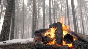Camino nella foresta di inverno al rallentatore durante le precipitazioni nevose stock footage