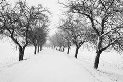 Camino nevado con el callejón de árboles durante la estación del invierno Foto de archivo libre de regalías