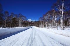 Camino nevado del abedul blanco Imagenes de archivo
